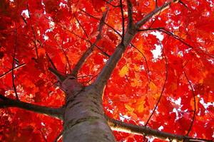 Вековой дубовый лес