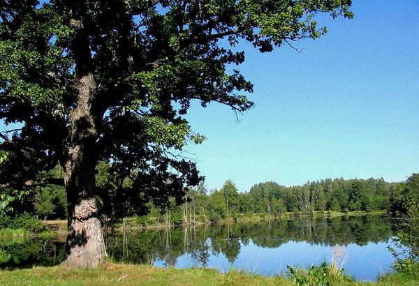 Озеров в Беловежской пуще