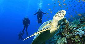 Подводное плавание Абу-Даби
